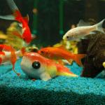 Aquarium Ratgeber: Aquariumkauf für Anfänger – 7 Tipps für Anfänger!