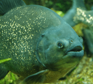 Karpfen fangen