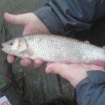 So kannst du Aland zu jeder Jahreszeit angeln