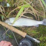 Fliegenfischen im Winter auf Äsche mit Nymphe