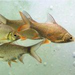 Wie kann man am besten Friedfische im Winter angeln?