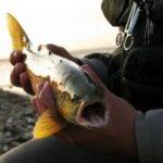 Angeln auf Rügen mit viel Platz für Angler