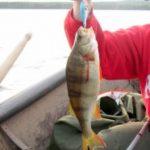 So kannst du Bodden angeln auf Barsch um Rügen
