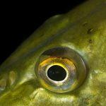 So kannst du auf Hecht Nachtfischen