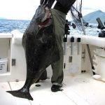 So kannst du auf Heilbutt in Norwegen angeln