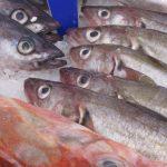 Gute Fangplätze zum Heringsangeln in der Ost- und Nordsee