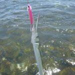 So kannst du Hornhecht in der Ostsee fangen