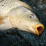 Mit diesem Tipp kannst du erfolgreich Karpfen im Winter angeln