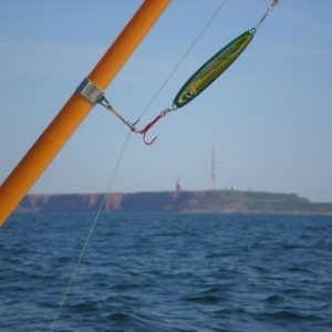Makrele Angeln Nordsee