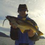 So kannst du erfolgreich in Norwegen auf Pollack angeln
