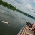 So kannst du mit Pellets auf Waller angeln