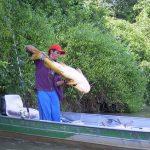 So kannst du Waller angeln mit dem Wallerholz als Hilfsmittel